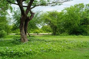 landschap met veel bomen en een weide met bloesembloemen op de grond foto