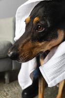 close-up smiley hond op de bank foto