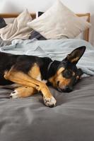 hond op bed foto