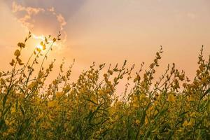 de hemelachtergrond in de ondergaande zon foto