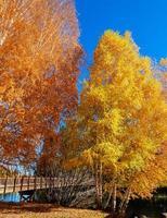 oktober bij optochtpark langs de bocht van de rivier de Deschutes, of foto