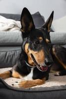 smiley hond zittend in zijn bed foto