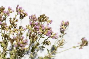 paarse bloemen op een struik foto