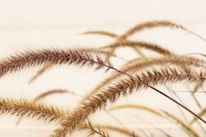 close-up van gedroogd gras foto