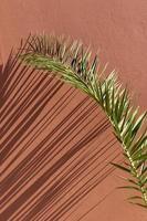 palmblad met schaduw op oranje achtergrond foto