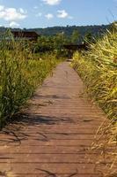 looppad passeer rijstveld naar het huis met heuvelachtergrond. foto