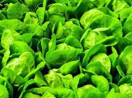 hydrocultuur boerderij voor voedsel foto