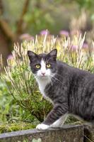 zwart-witte kat in een tuin foto