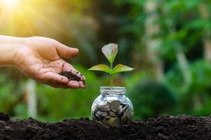 hand zet geld fles bankbiljetten boombeeld van bankbiljet met plant groeit bovenop voor zaken groen natuurlijke achtergrond geldbesparing en investering financieel concept foto