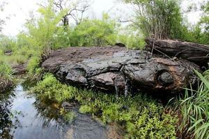 pha luang waterval bospark, amphoe si mueang mai, ubon ratchathani, thailand foto