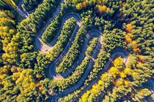 luchtfoto van een kronkelende bergweg die door een dennenbomen in het bos loopt foto