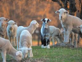 jong lam wordt nieuwsgierig op de boerderij foto