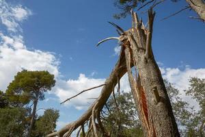 stormschade en gebroken boom in het bos foto