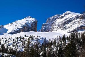 besneeuwde toppen en pijnbomen met blauwe luchten foto