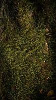 verticale met mos bedekte steen foto