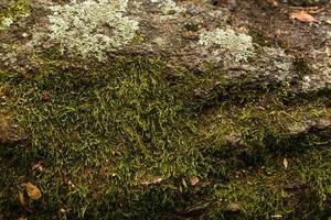 met mos bedekte steen foto