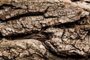 textuur achtergrond van bruine schors van een boom foto
