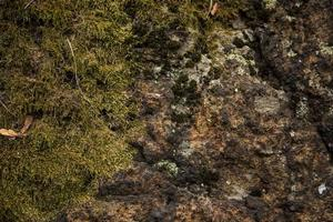prachtige met mos en korstmos bedekte steen foto