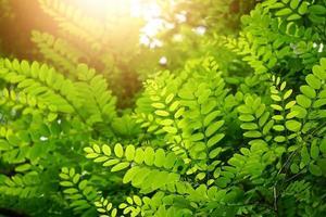 groene boom bladeren in de lente seizoen groene achtergrond foto