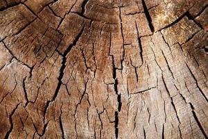 houtstructuur van gesneden boomstam foto