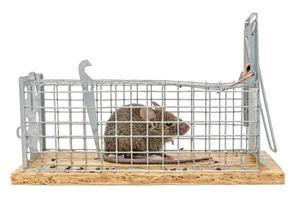kleine muis zit gevangen in een draadval tegen onscherpe achtergrond foto