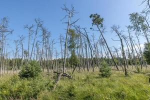 Duitse heide boslandschap met gras en loofbomen in de zomer foto