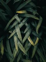 groene plant bladeren in de natuur in de lente foto