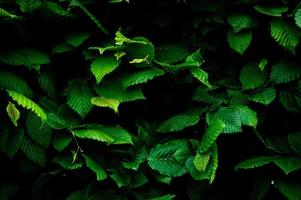 achtergrond van groene bladeren full frame shot van planten foto