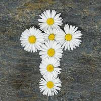 christelijk kruis gemaakt van witte margriet bloemen op een grijze leistenen plaat foto