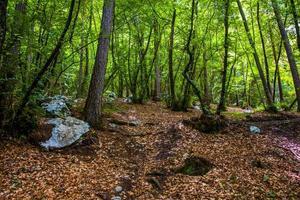 bomen in het bos foto