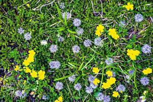 bloemen in het gras foto