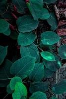 groene plant bladeren in de lente foto