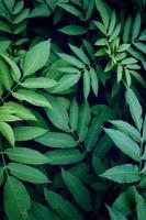 groene plant bladeren in de natuur foto