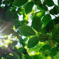 groene boom bladeren in de natuur groene achtergrond foto