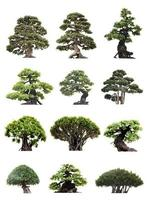 groep bonsaibomen op witte achtergrond wordt geïsoleerd die foto
