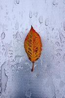 bruin boomblad in de herfstseizoen foto