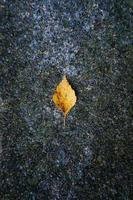 geel boomblad in de herfstseizoen foto
