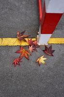 rood esdoornblad in de herfstseizoen foto