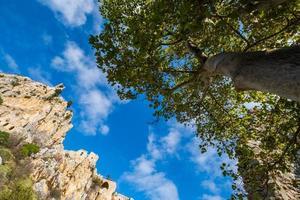 een boom bij de ruïnes van het kasteel van Saint Hilarion in Kyrenia in Cyprus foto