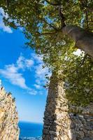 een boom bij de ruïnes van het kasteel van saint hilarion kyrenia cyprus foto