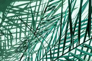 minimale turquoise kleur plant achtergrond met schaduw op de muur foto