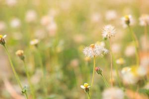 zomer bloem achtergrond foto