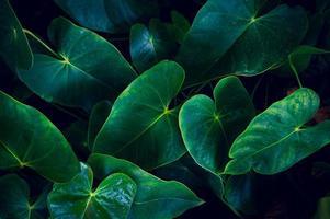 donkere tropische groene gebladerteachtergrond foto