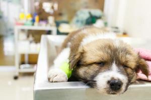 schattige puppy thai bangkaew hond ziek en slapen op operatietafel in de kliniek van de dierenarts foto