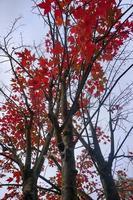 bomen met bruine bladeren in de herfstseizoen foto