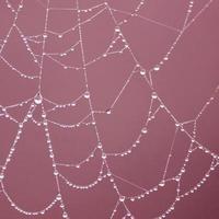 druppels op het spinnenweb in de natuur foto