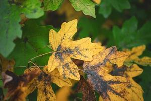 gele boombladeren in de herfstseizoen foto