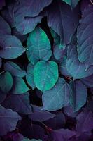 blauwe en groene plant verlaat blauwe achtergrond foto