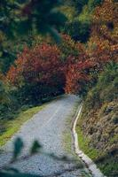 weg met bruine bomen in de herfstseizoen foto