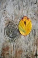 geel blad in de natuur in de herfst foto